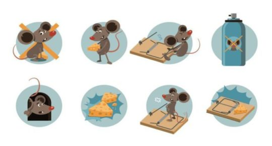 rat-away-บริการ-กำจัดหนู-ด้วยน้ำยาสมุนไพร-rat-control-service-in-Thailand-27